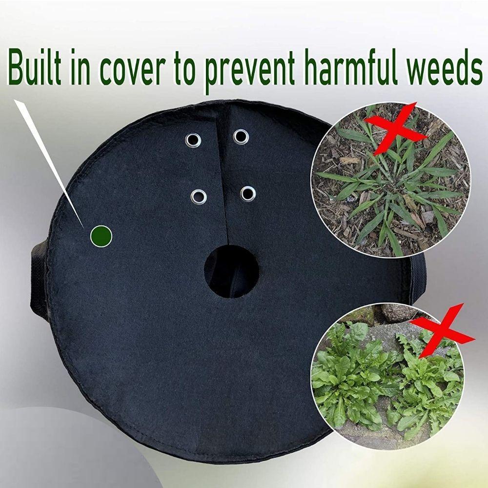 grow bag planting